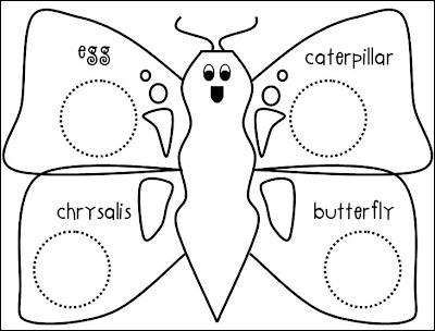 Preschool Butterfly Life Cycle Worksheet