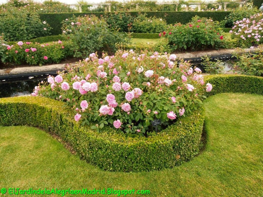 el jard n de la alegr a rosas y rosales ingleses de