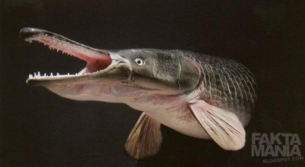 Inilah 7 Ikan Teraneh di Dunia