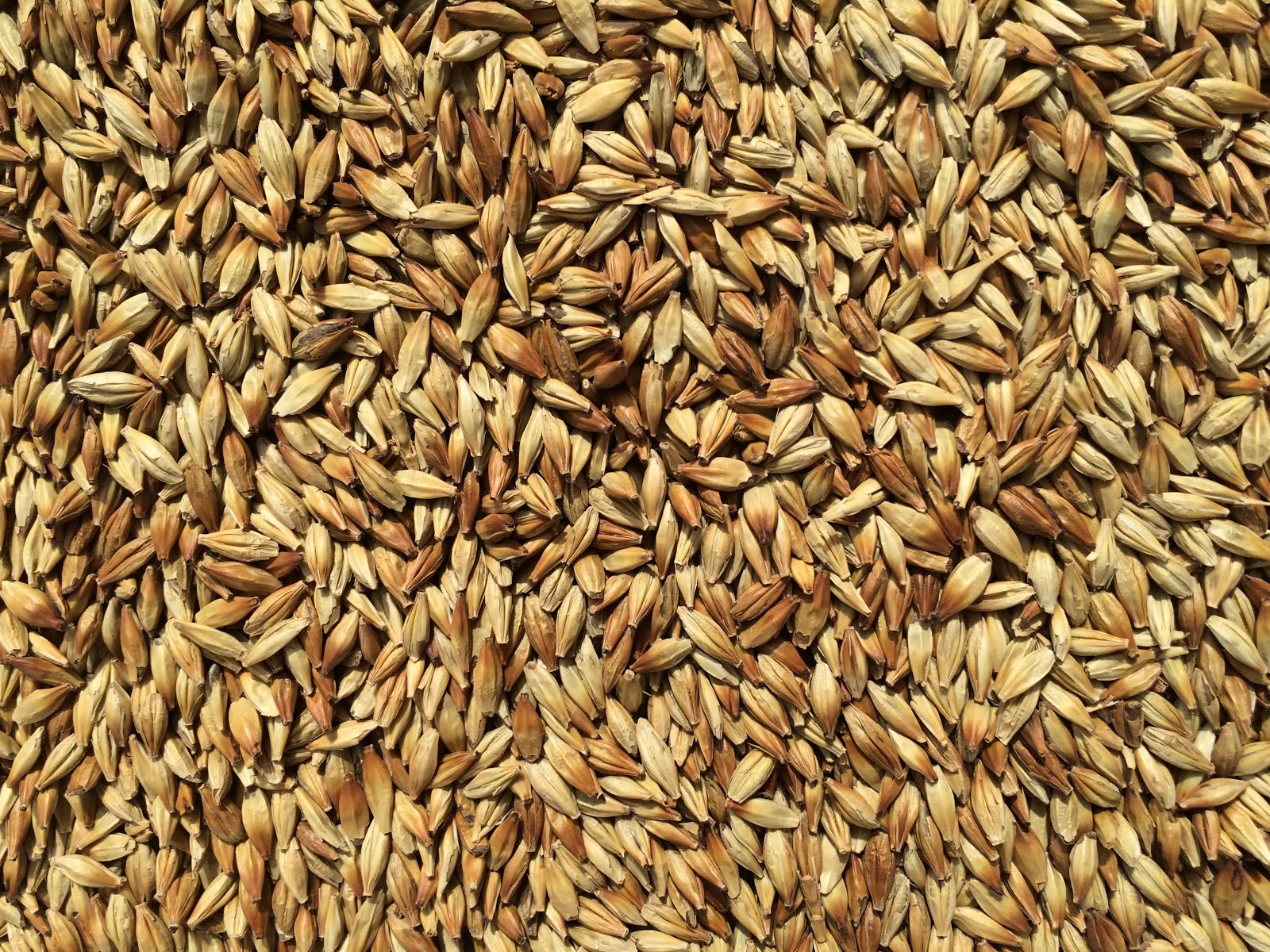 Palouse Pint Malts