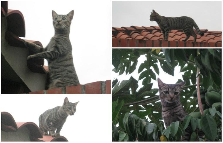 El reportaje gráfico. Un gato en el tejado