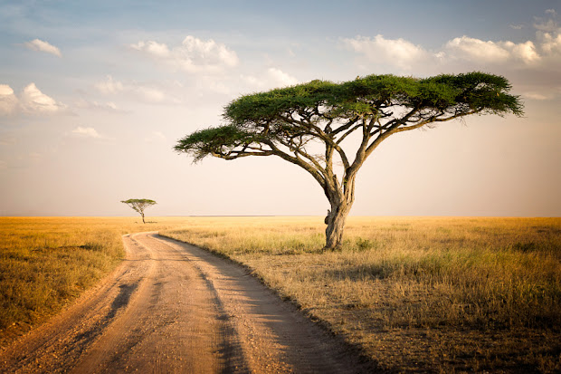 's travel world serengeti
