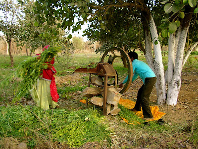 Activities on an organic farm in India