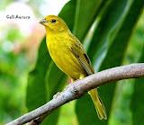 Não cace, não prenda os pássaros, não desmate! Não maltrade os animais. Preserve a natureza!