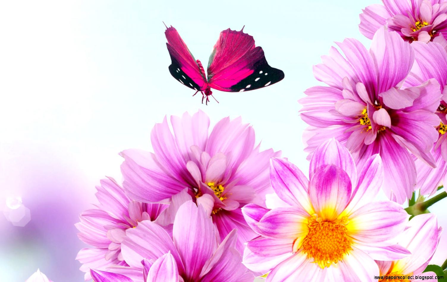 Flowers Desktop Backgrounds Pink Flowers Photospink Flowers Images