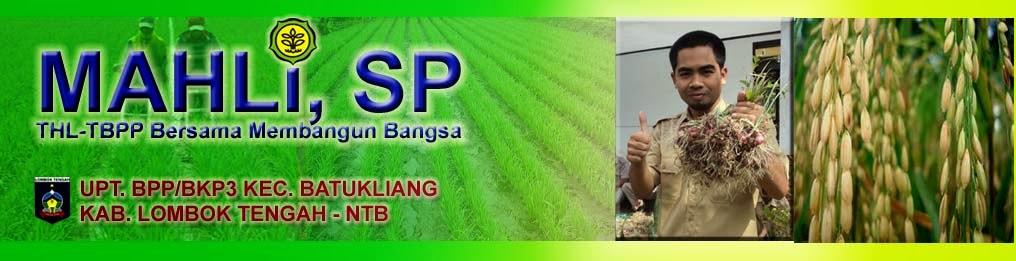 THL-TB Penyuluh Pertanian