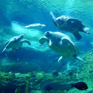 Sea World Orlando Florida (Best Honeymoon Destinations In USA) 10