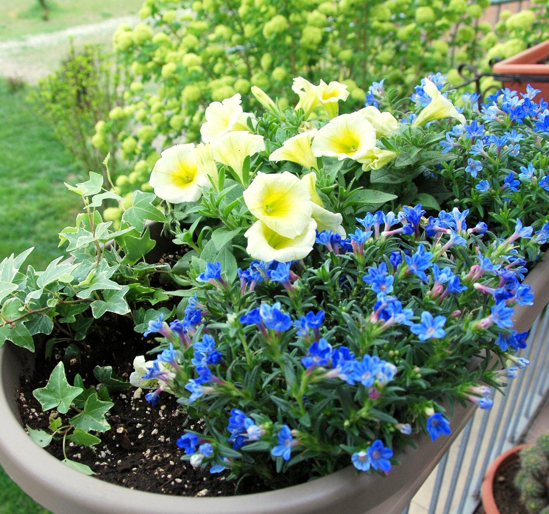 Il mondo in un giardino ancora idee per composizioni in vaso - Fiori perenni da giardino ...