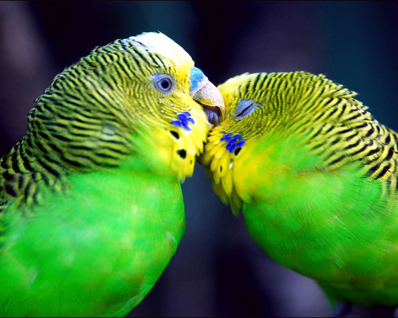 http://3.bp.blogspot.com/-uaPZLdg9eFc/UGQKFg4z5jI/AAAAAAAAHCY/63Zp0H5c-qg/s1600/Birds%2BIn%2BLove%2BHD%2BWallpaper%2B-%2BbestLovehdWallpapers.Blogspot.Com.jpg