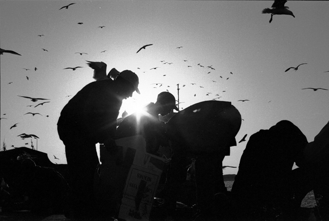 boys gutting fish in Essaouira surrounded by birds