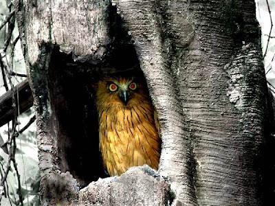 Burung Hantu Mahluk Halus?