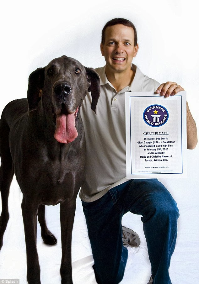 Tallest dog in the world - photo#23