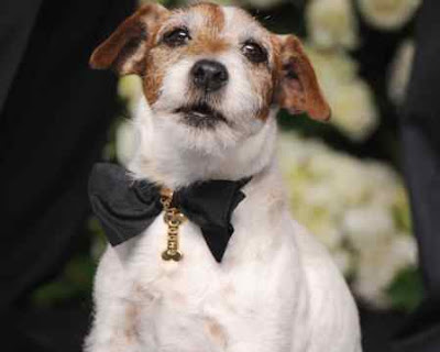 Uggie bow tie