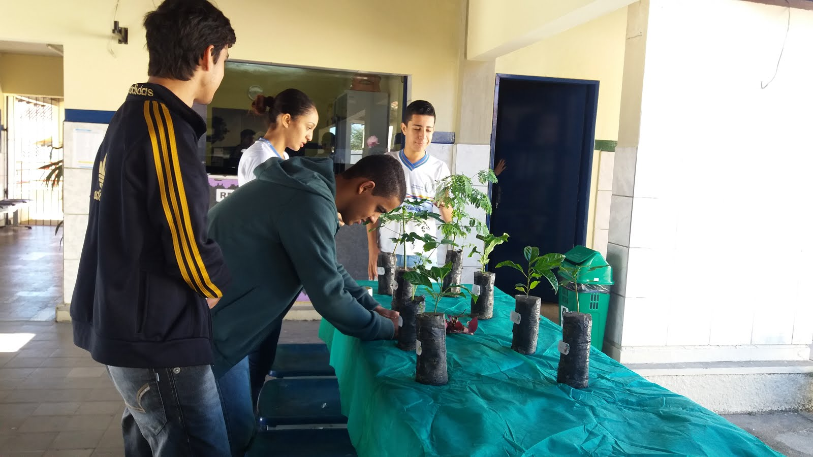 Projeto Adote uma Planta