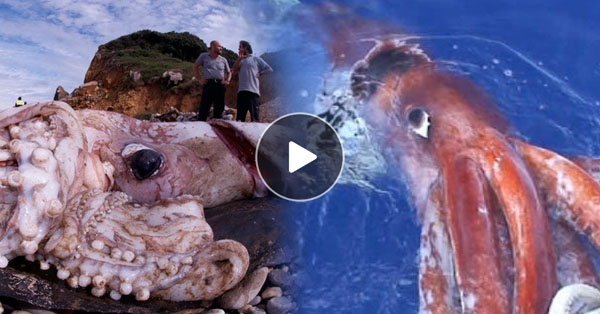 Unbelievably huge squid caught on cam by Russian Scientists!