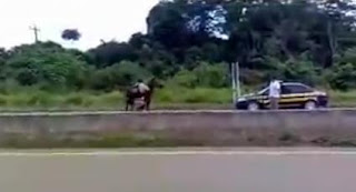 Polis Tembak Kuda