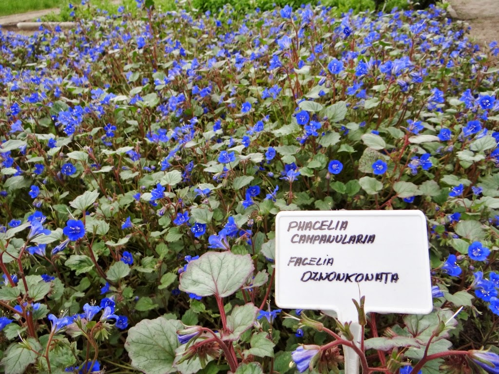 Ogród botaniczny w Łodzi