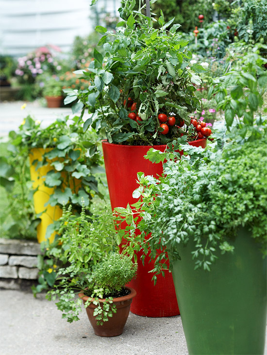 Cottage Garden: Fresh Ideas for Growing Vegetables in ...