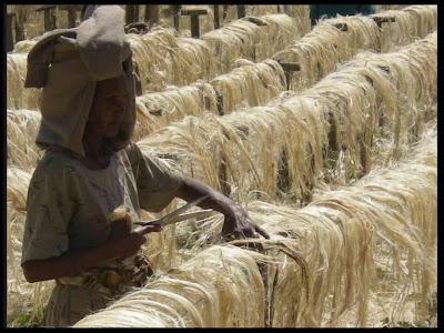 Serendipia cuerda de pita el sisal en etiop a for Cuerda de pita