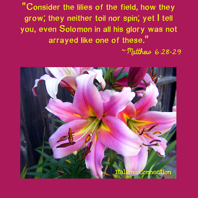 Consider the Lilies of the field, how they grow; Organic, Fragrant Lilies.
