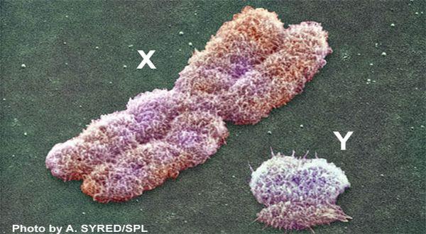 Kromosom x dan kromosom y