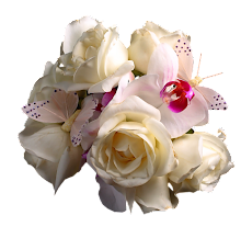 Rosas claras