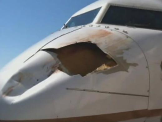 United Flight Collides With Bird On Descent To Denver