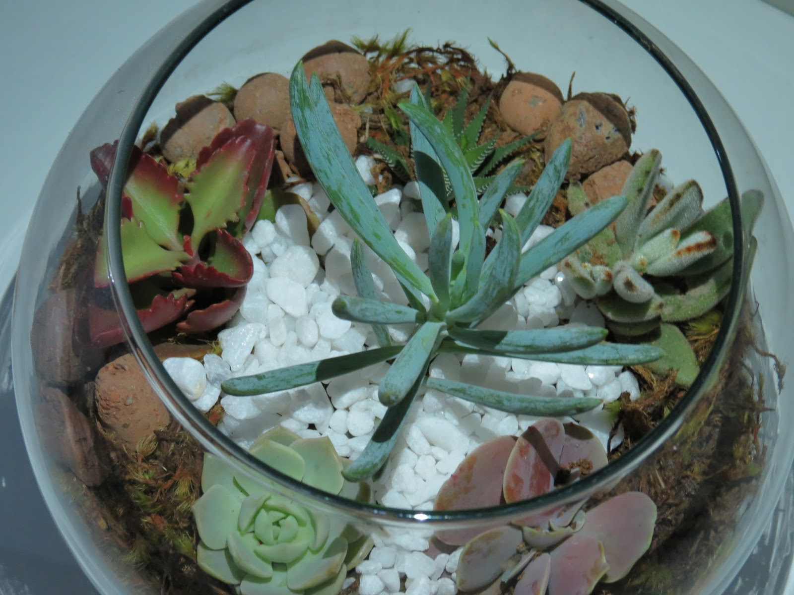mini jardim em vaso de vidro: de nada nessa vida abraços aos parceiros de profissão paulo heib