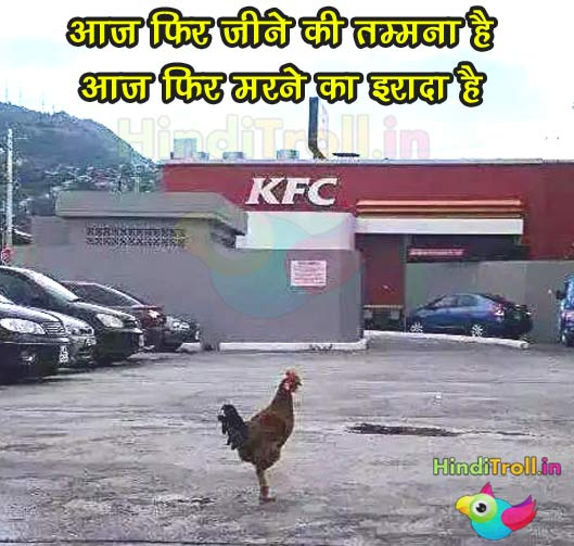 KFC Hen Funny Picture | KFC Troll Photo | Funny Hen Outside KFC