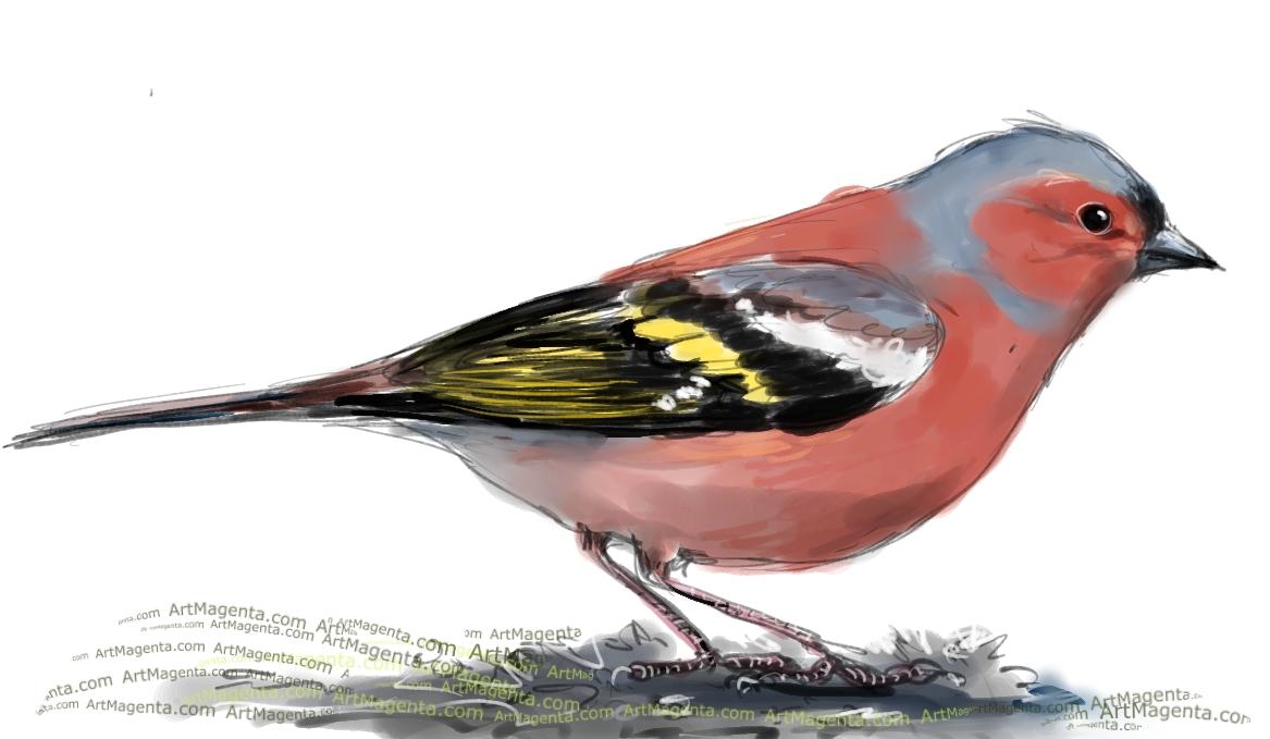 En fågelmålning av enbofink  från Artmagentas svenska galleri om fåglar