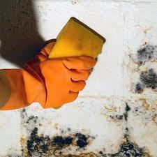 Como utilizar la pintura anti hongos construya f cil for Quitar moho paredes por condensacion