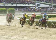 Hipódromo de Valencia: inaugurado el 25 de marzo de 1983. Importante óvalo en el centro del país.