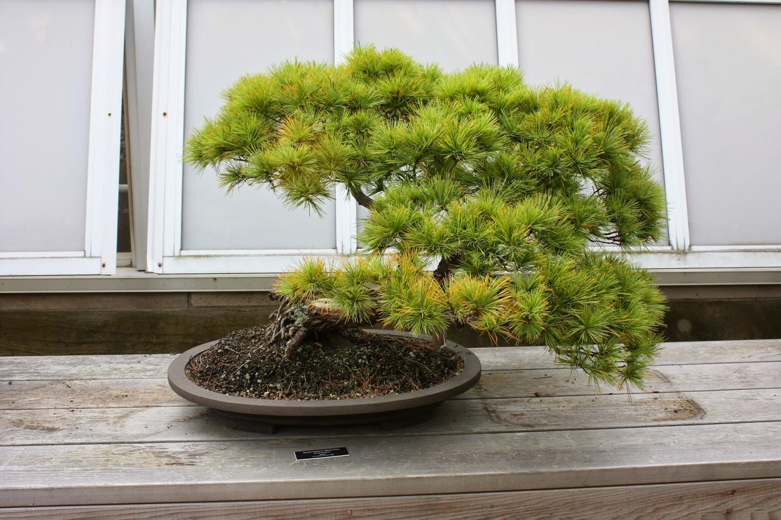 Garden Thyme With The Creative Gardener Japanese Garden Design Ideas
