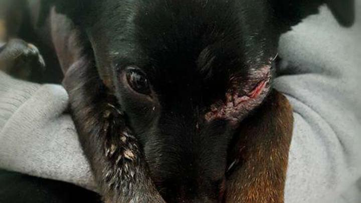 #Codigo Penal SUBTIPO AGRAVADO E INHABILITACION PERMANENTE PARA DELITOS DE MALTRATO ANIMAL