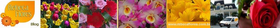 Blog  Rebeca Flores Alphaville