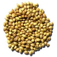 naturopatia semi di coriandolo