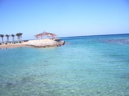 imagem da praia com vegetação e água cristalina