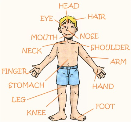 ignacio asencio: Video: partes del cuerpo en ingles