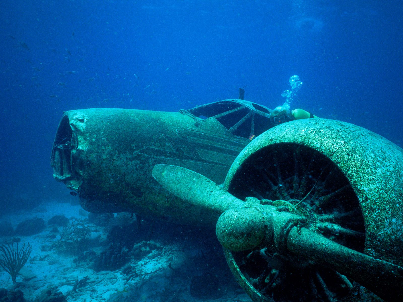 http://3.bp.blogspot.com/-ueOu88CL9FQ/TxgsxRdKHZI/AAAAAAAADsI/3pG3LwZX8oY/s1600/airplanes_crash_wrecks_underwater_airplane_wreck_diving_disaster_desktop_1600x1200_wallpaper-177768.jpeg