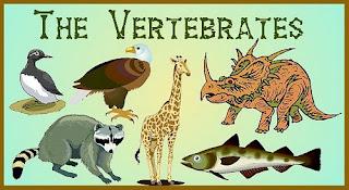 Ilmu Pengetahuan Jenis Hewan Vertebrata