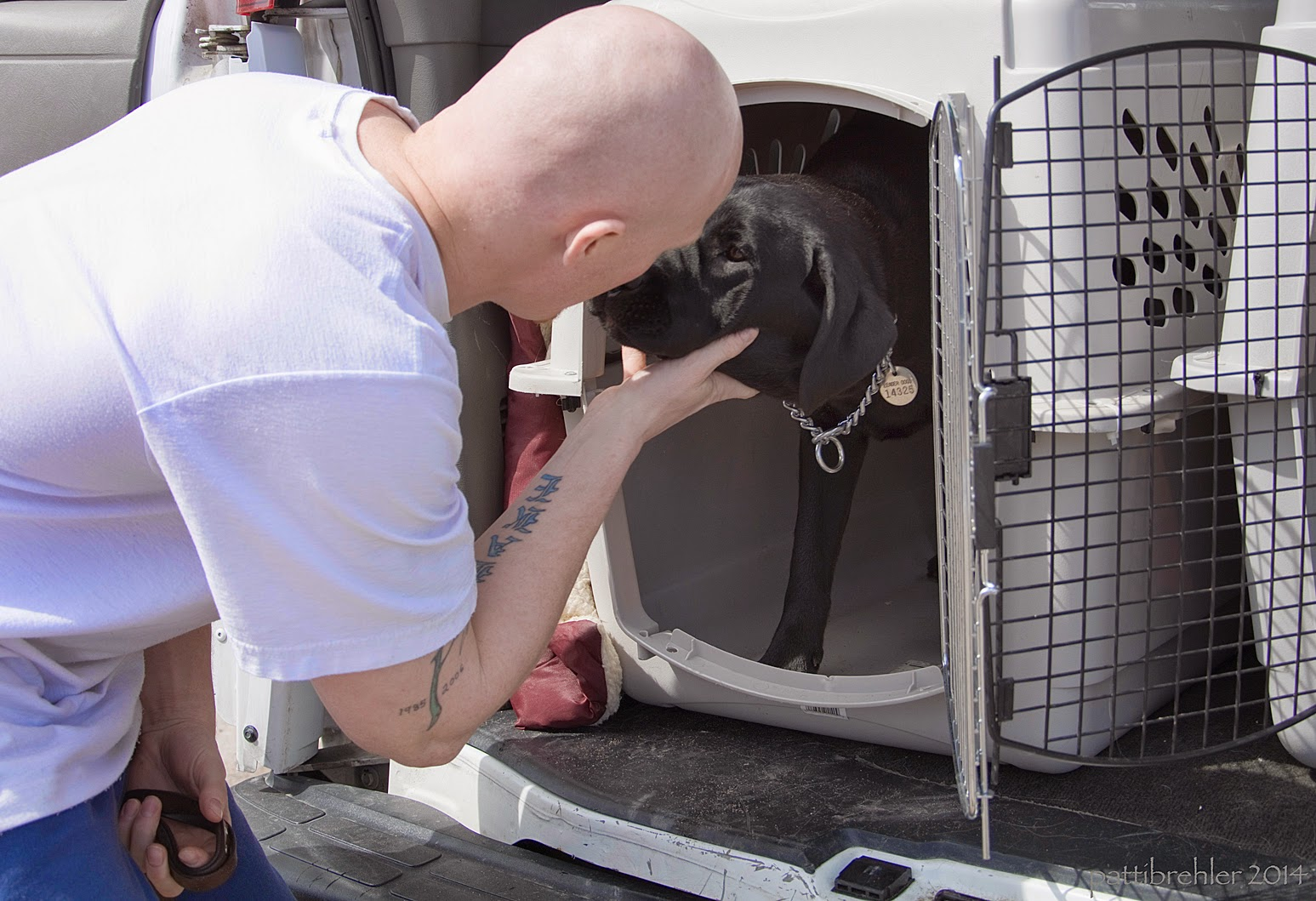The bald man in a white t-shirt is holding the chin of a black lab and pressing his face toward the lab. The lab is inside of an airline dog crate, facing out, with the wire door open wide.