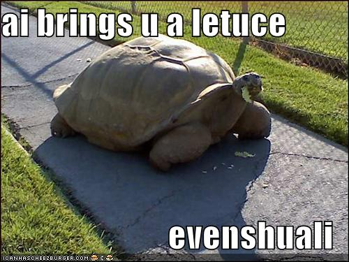 Funny turtle pictures with words - photo#11