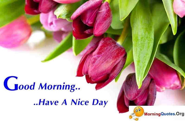 Good-Morning-Images-of-Flowers