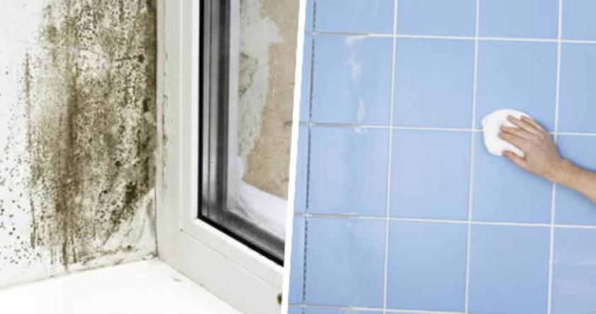 Consigli pratici per prevenire e rimuovere la muffa dal bagno ilquieora - Muffa bagno candeggina ...