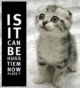 kittah hugs tiem