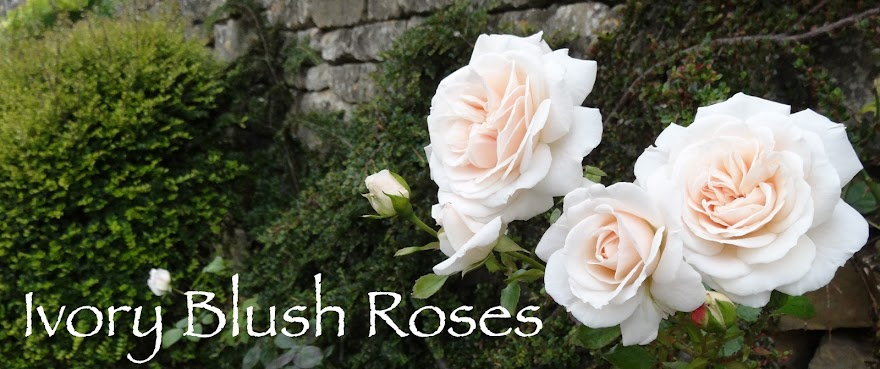 Ivory Blush Roses