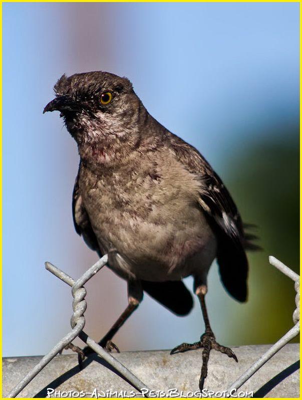 http://3.bp.blogspot.com/-ufmAJdGAA3w/Tt-Pxzp-zdI/AAAAAAAACjo/s6Q6BK_MRpA/s1600/bird.jpg
