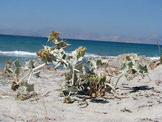 Beach Holly Mastichari