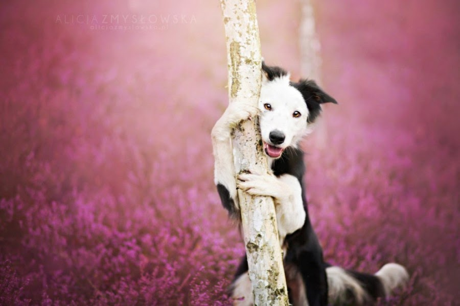 Girl's Best Friend: Breathtaking Dogs Photography by Alicja Zmyslowska