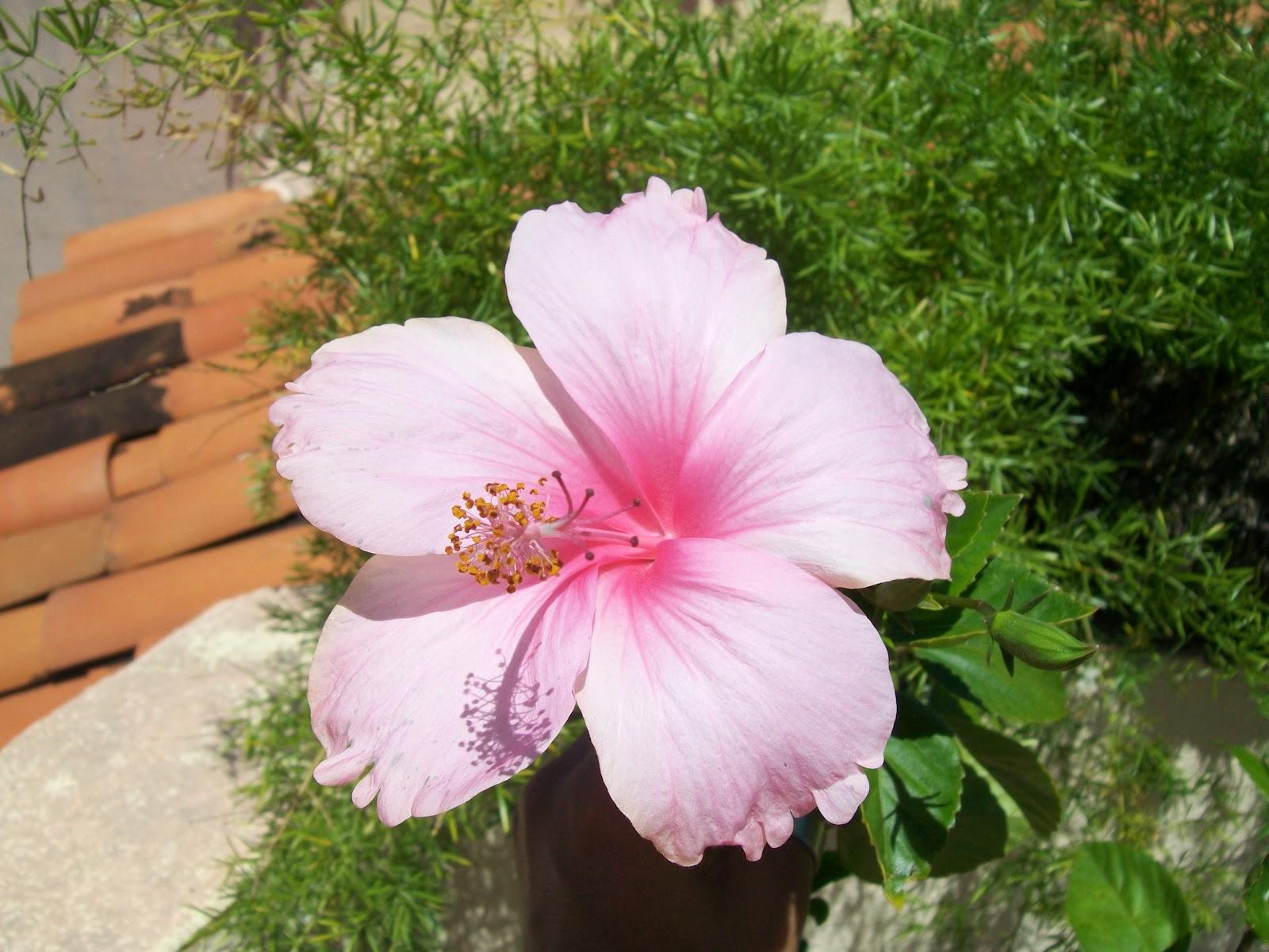 flores de jardim fotos e nomes:flores plantas árvores aqui na minha casa tem 3 espaços para plantas